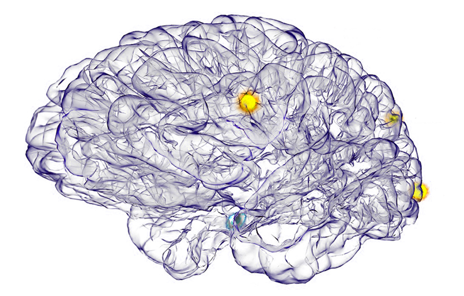 Brain Neurons Image